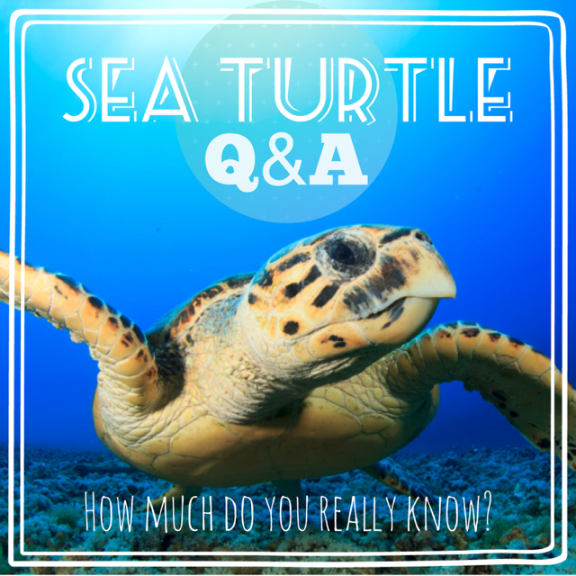 Photo Title Sea Turtle Q and A